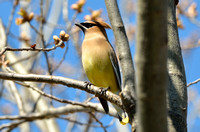 Installing bird feeders early in the season is a great way to capture photos of migrating birds.
