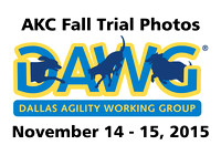 DAWG AKC Agility November 2015
